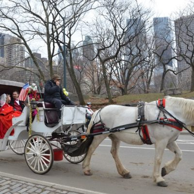 New Year's Day Elopement in Central Park