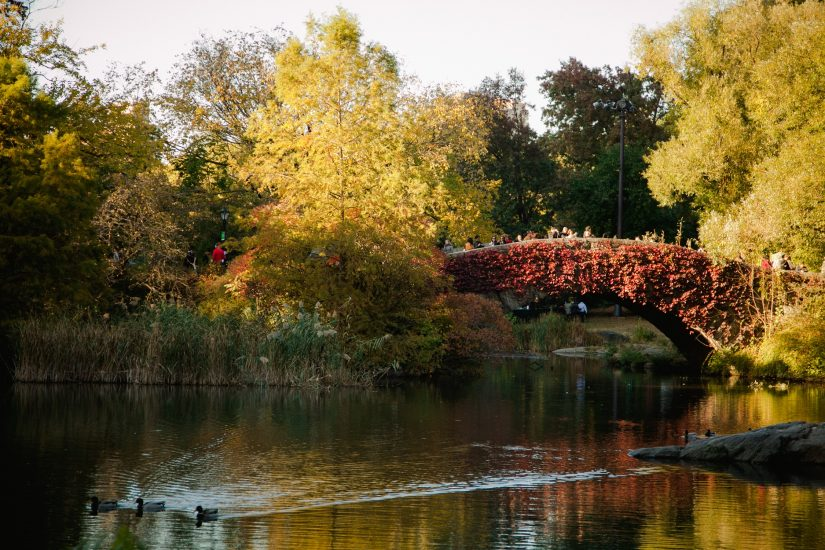 acentralparkwedding-gapstow-bridge (2)